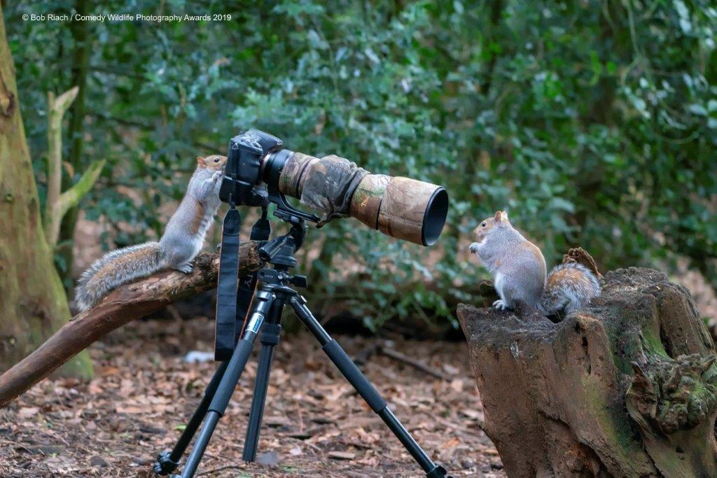 © Bob Riach / Comedy Wildlife Photo Awards 2019