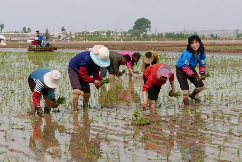 北韓農民(AP)