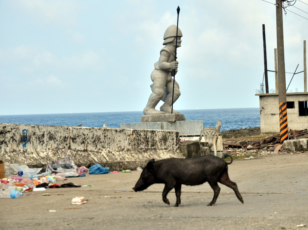 Wild pigs upturn garbage cans in search of food, causing havoc on Orchid island.
