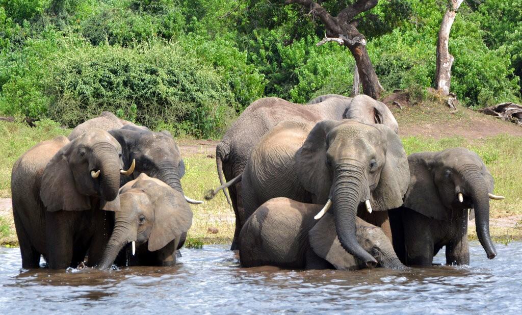 大象。(照片來源:美聯社)