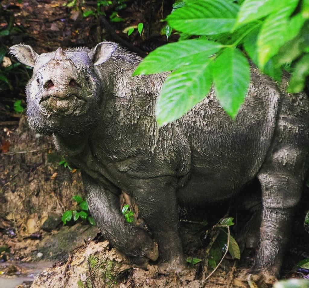 照片來源:WWF-Malaysia.