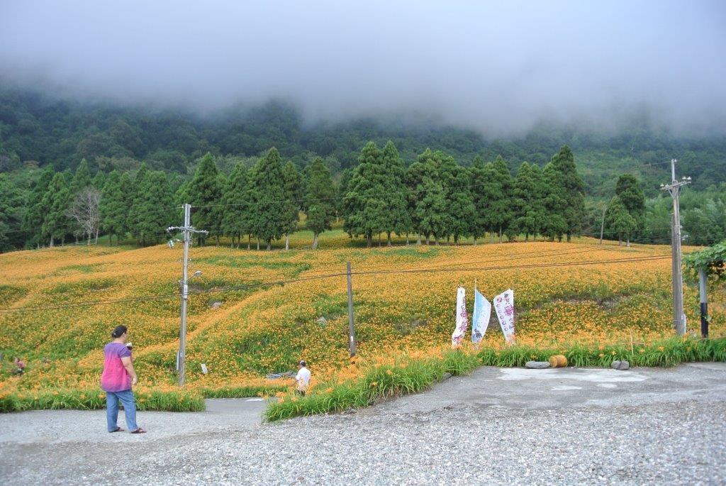 照片來源:花蓮改良場提供
