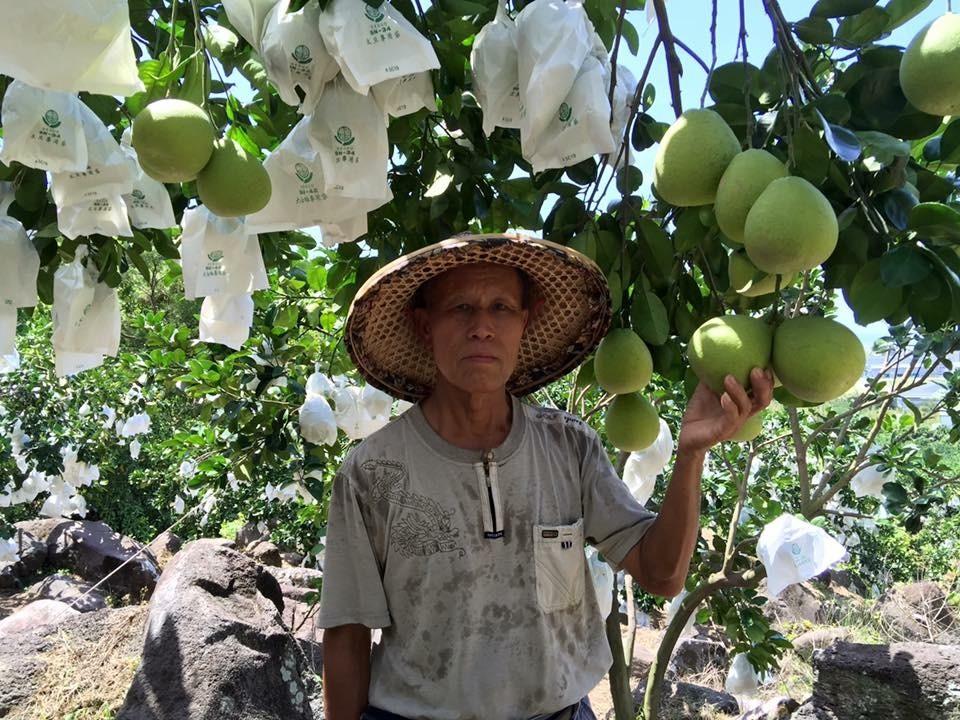 農友(黃阿發)與柚子(套果)合影 (新北市政府農業局提供)
