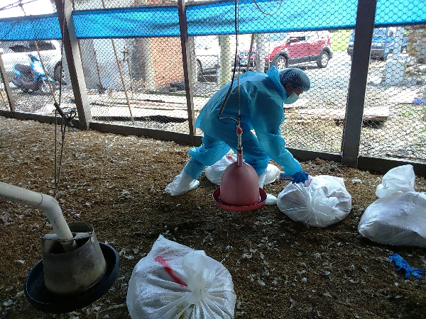 Bureau of Animal and Plant Health Inspection and Quarantine performs disinfecting operation at Chuanghua farm