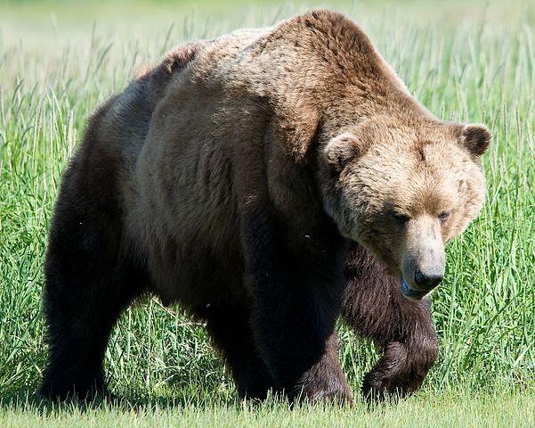 俄男子遭棕熊當「食物」囤積  洞穴歷險月餘奇蹟生還