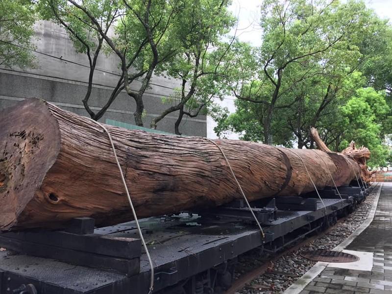 Taiwan cypress (Facebook Joanna Sun)