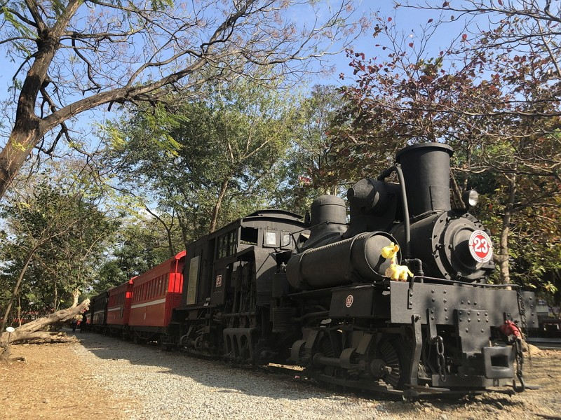 Hop on cypress train to visit old sawmill in Taiwan's Alishan mountains