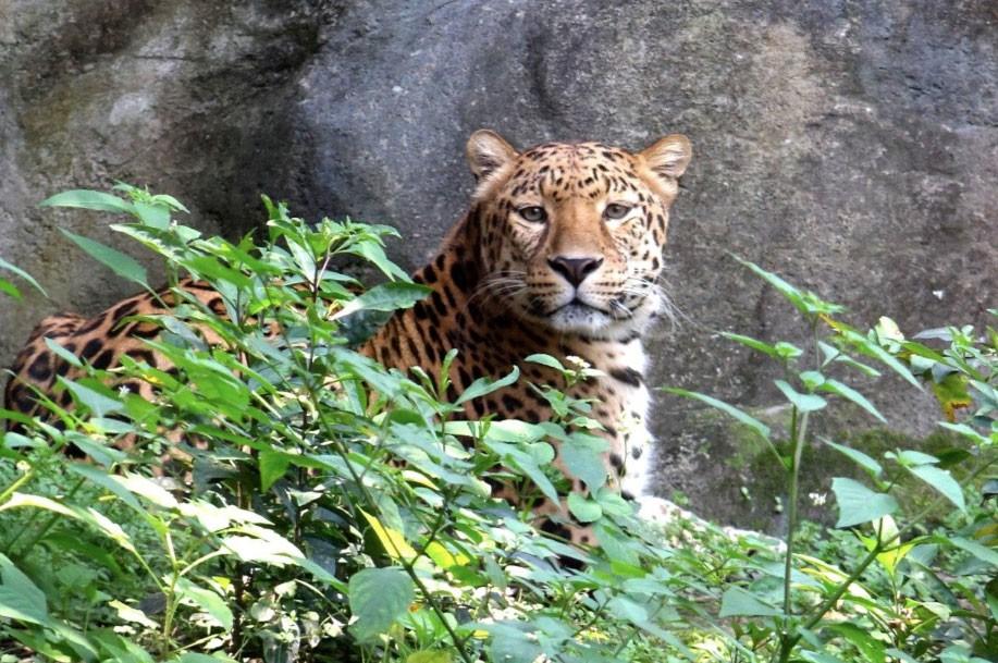 台北市立動物園暑假特別延長開放時間(圖/動物園)