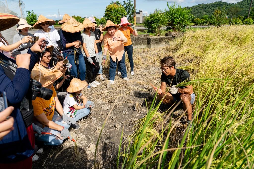 713(六)棗健康有機農場&青出宜蘭合作社,將舉辦親子割稻體驗活動。(圖/青出宜蘭農業運銷合作社)