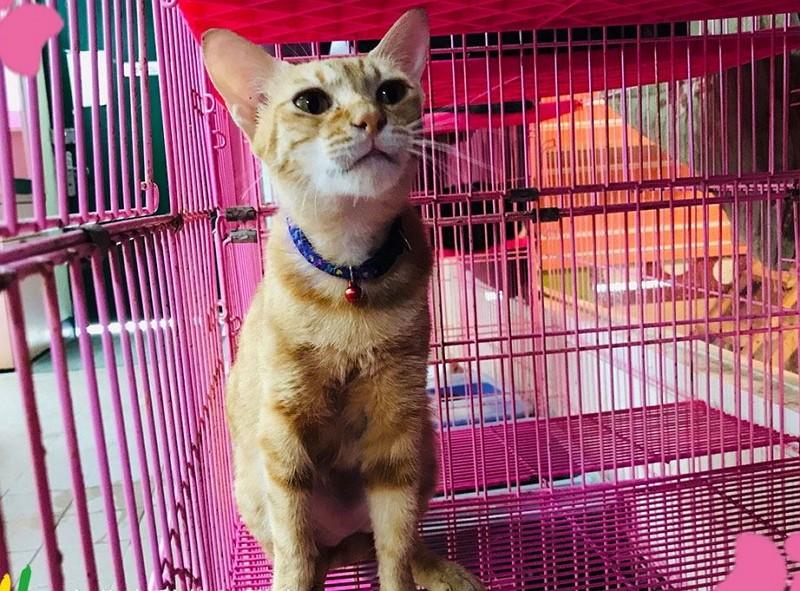 (Taipei Animal Shelter photo)