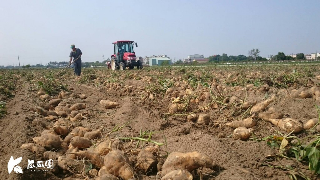 Taiwan's sweet potatoes are able to compete in the global market. (photo: K.K.Orchard's Facebook page)