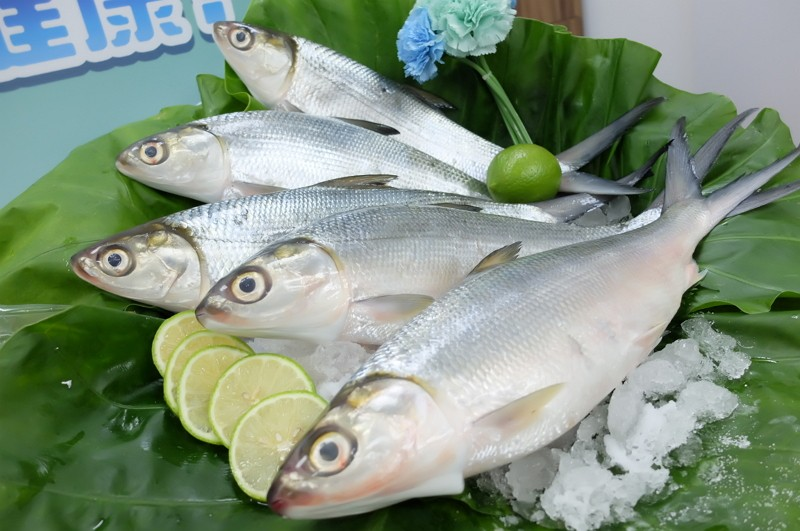 Milkfish (Fisheries Agency photo)
