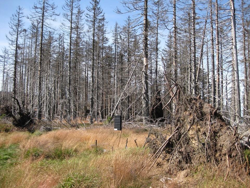 Stock image of forest destroyed by acid rain. (Pixabay image)