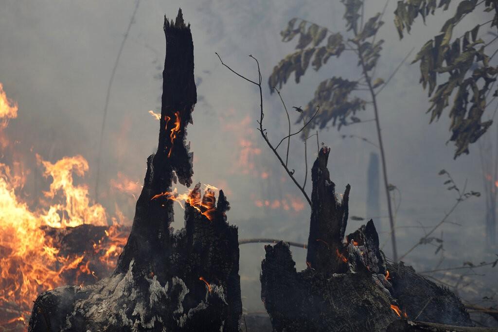 巴西亞馬遜大火(圖/AP)