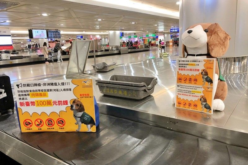 Taiwan mulls expanding African swine fever checks to passengers from all Asian countries.