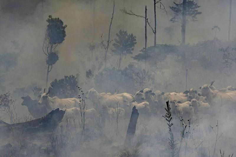 亞馬遜雨林大火(圖/AP)