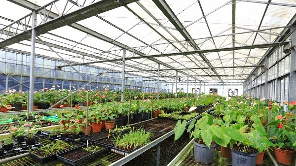 Floriculture Research Center in western Taiwan's Yunlin County (Taiwan Today photo)