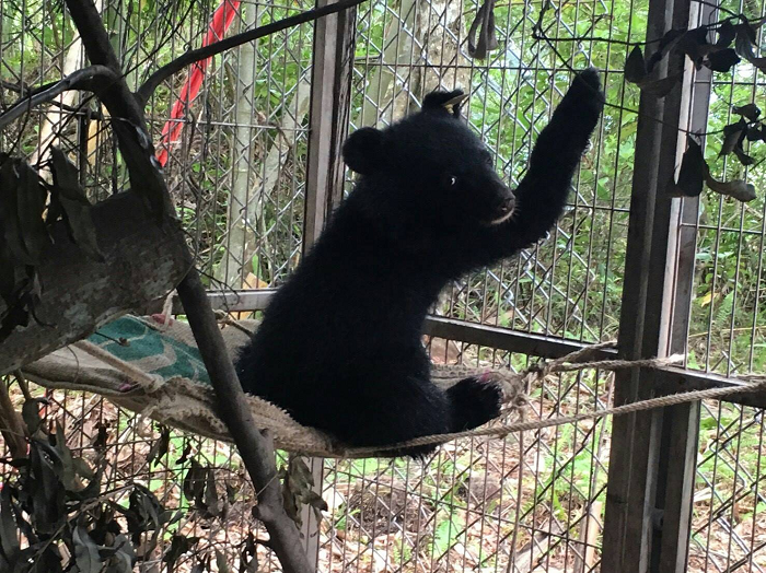 Taiwan black bear cub 'Mulas'