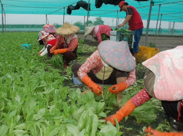 File photo: Farmers in Yunlin County
