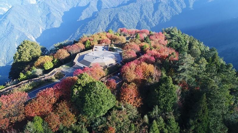 Ogasawara Mountain (小笠原山) in Alishan Forest Recreation Area (Taiwan Forest Bureau photo)