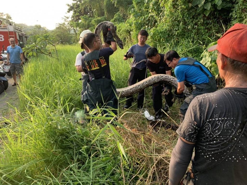 Firefighters capturing python. (Kaohsiung Fire Bureau photo)