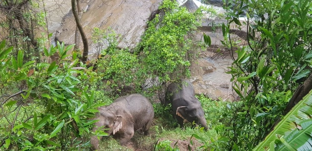 Two elephants of the herd rescued by park rangers