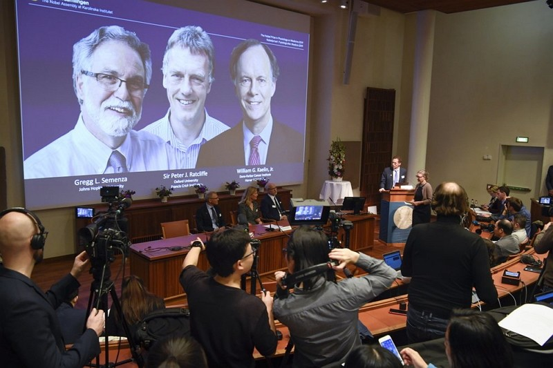The Nobel Committee announces the 2019 Nobel laureates in Physiology or Medicine (AP photo)