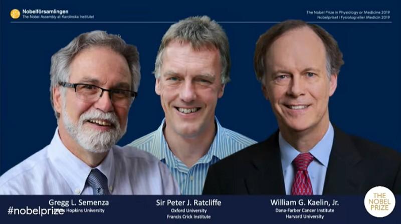 2019年諾貝爾得主,美國醫學家塞門薩(左)、英國醫學家雷克里夫(中)及美國癌症學家凱林(圖/Nobel Prize YouTube)