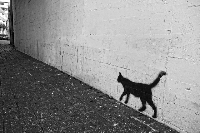 Cat graffiti (Pixabay photo)