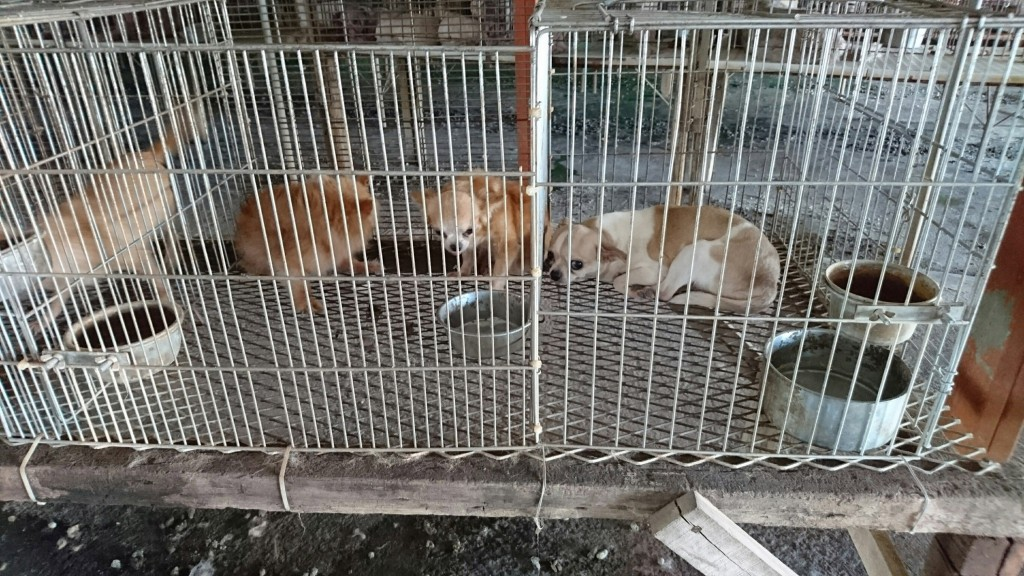 A raid on an illegal breeding farm in Yunlin County turned up more than 200 cats and dogs (photo by Cheng An-kuo).
