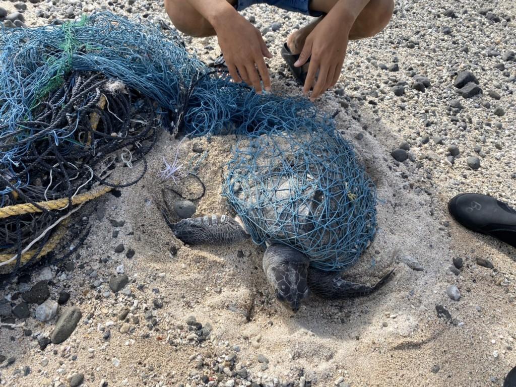 綠島安檢所21日在綠島石朗岸際發現一隻海龜,遭漁網纏繞奄奄一息,立即趕往救援 (中央社)