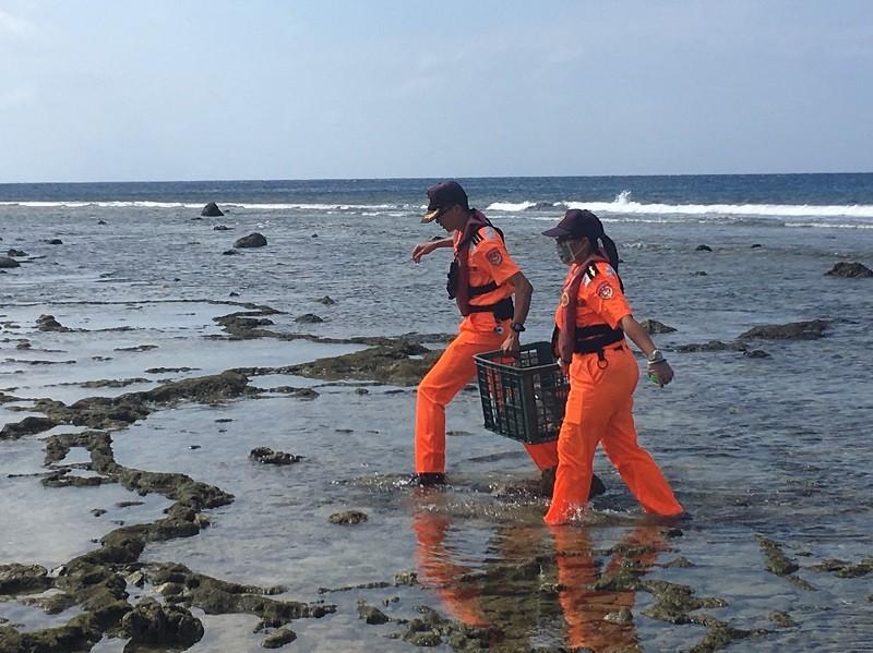 海巡人員抵達後,立即除去欖蠵龜身上的漁網並持續給予海水保持濕潤。中央社