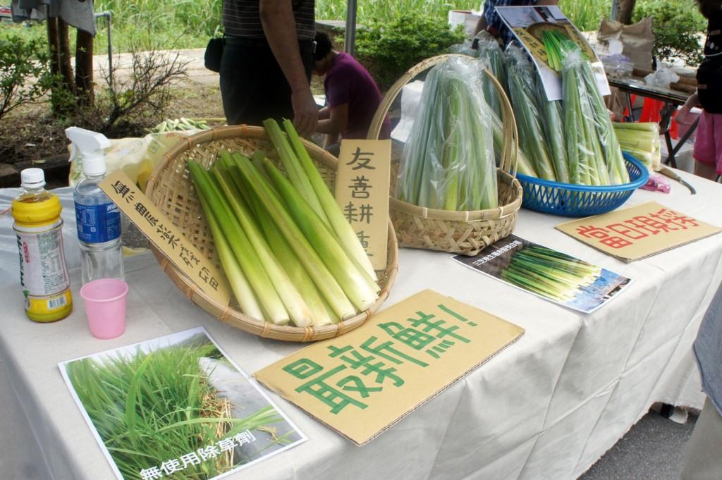 三芝茭白筍產季到 週末產地行銷盛大展開