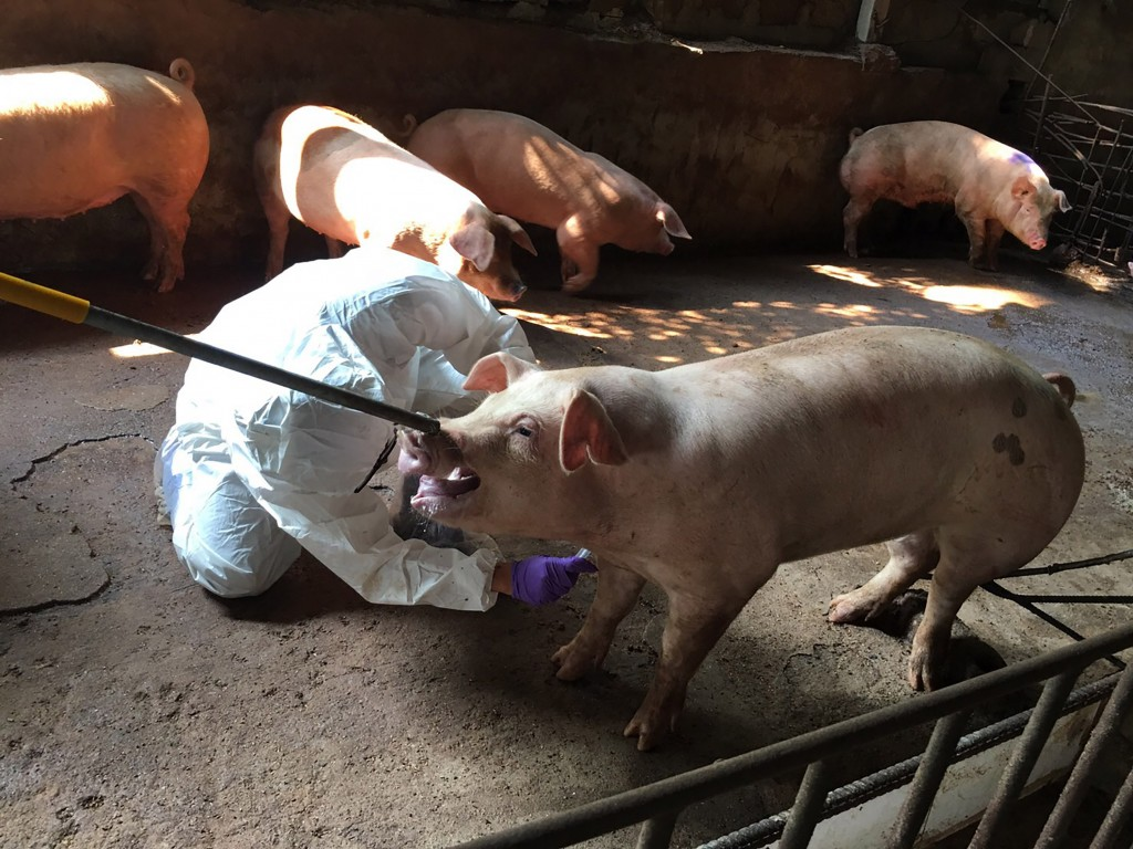 OIE chief believes African swine fever will continue expanding.