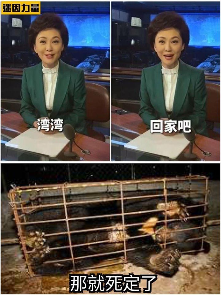 Sarcastic 'Wan Wan come home' memes spread across Taiwan