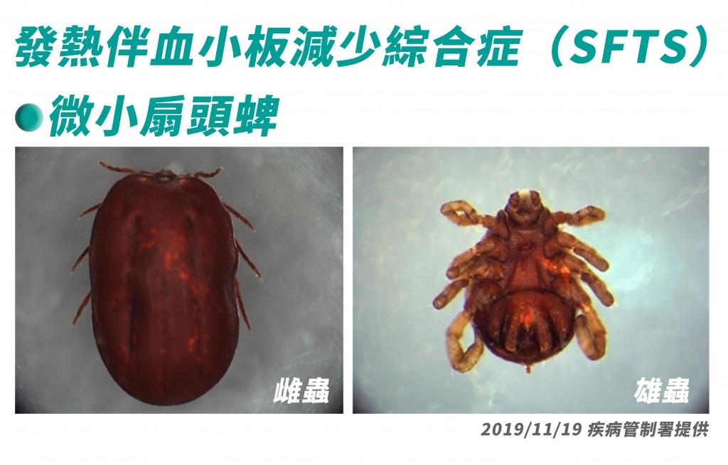 圖為微小扇頭蜱。(圖/疾管署)
