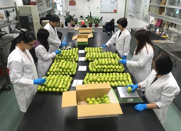 Taiwan is first country to sell jujubes in South Korea. (CNA photo)