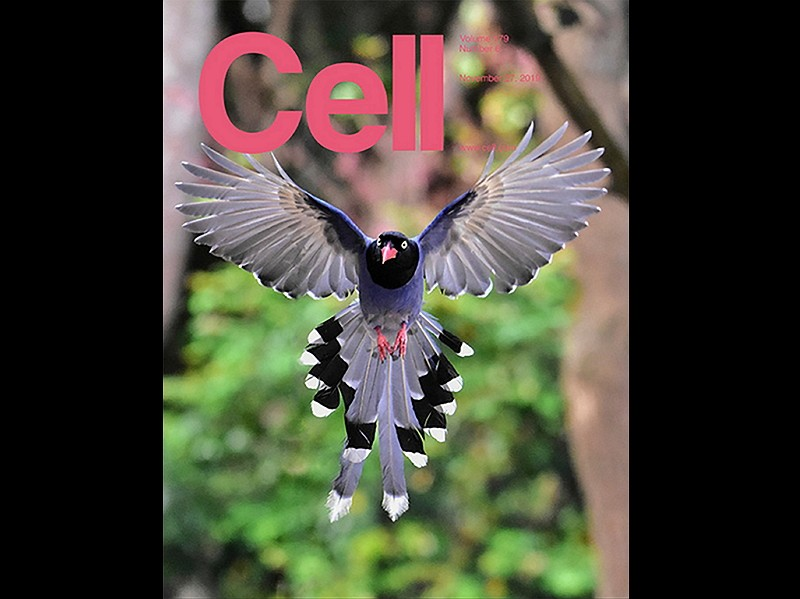 "Cover of ""Cell"" issue featuring Taiwan-US study."