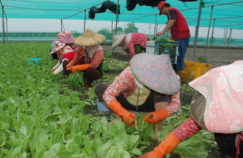 Farm workers in Taiwan.