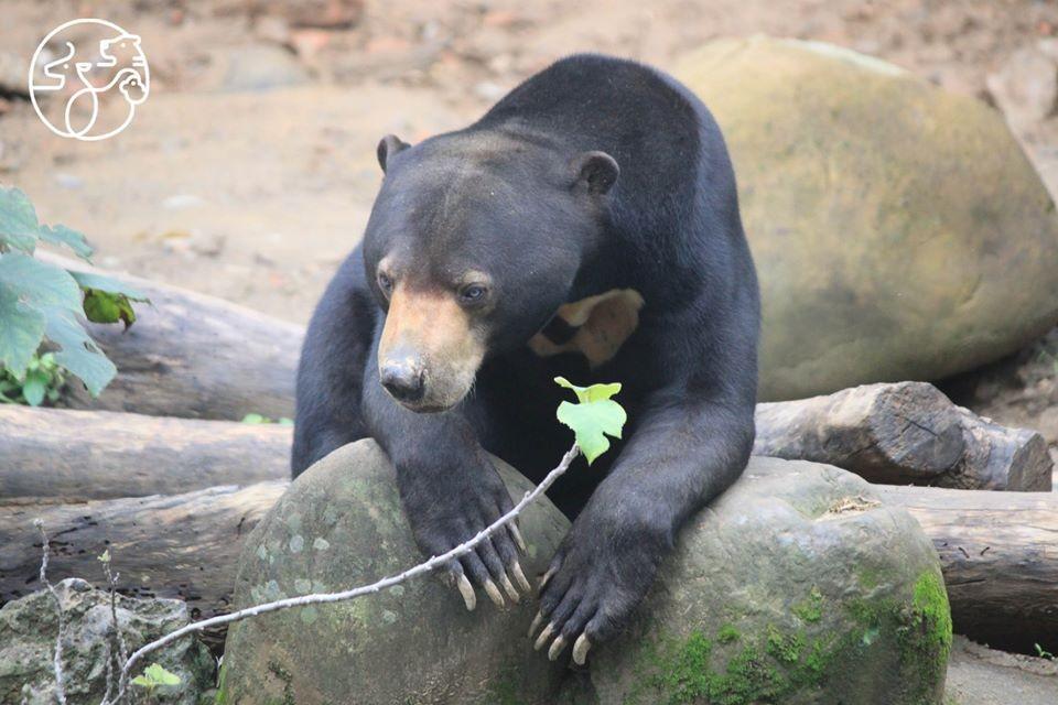 親子好去處!新竹市立動物園28日重新開園 用悠遊卡入園嘛ㄟ通