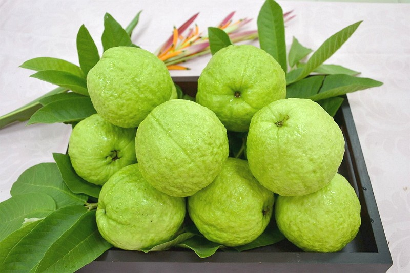 Taiwan guavas. (Kaohsiung District Agricultural Research and Extention Station photo)