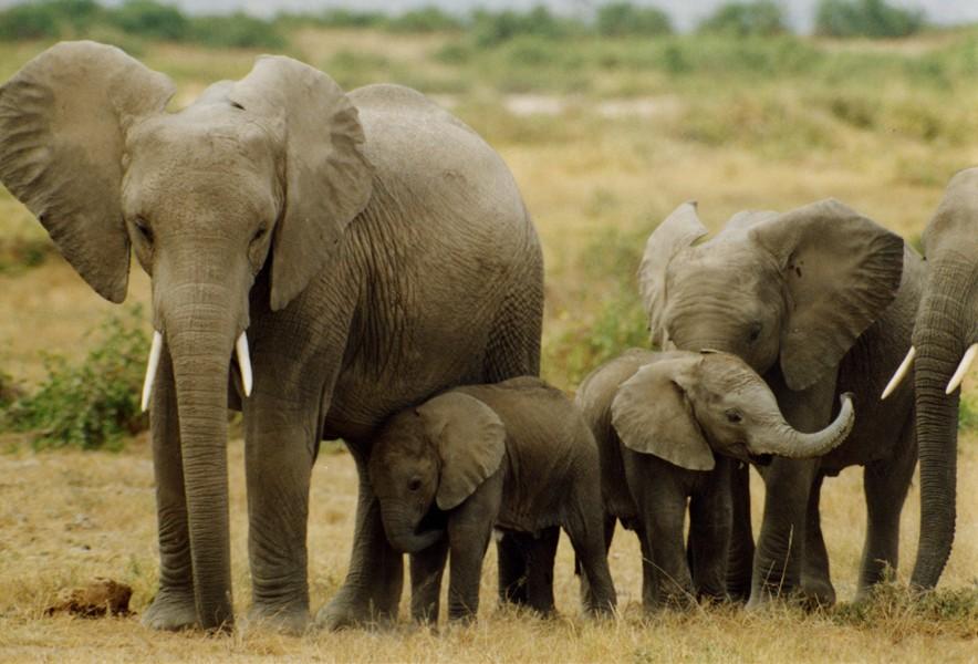 大象。(照片由WildAid提供)