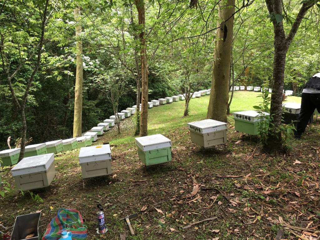 林下養蜂。(照片來源:林務局 / 何政坤攝)