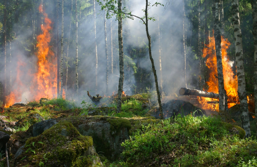 去年毀林面積相當於一個英國大(圖/pexels)