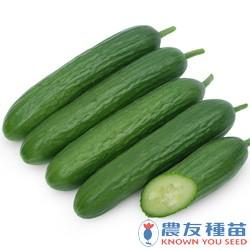 圖為短果型的水果胡瓜(圖片翻攝自農友種苗網站)