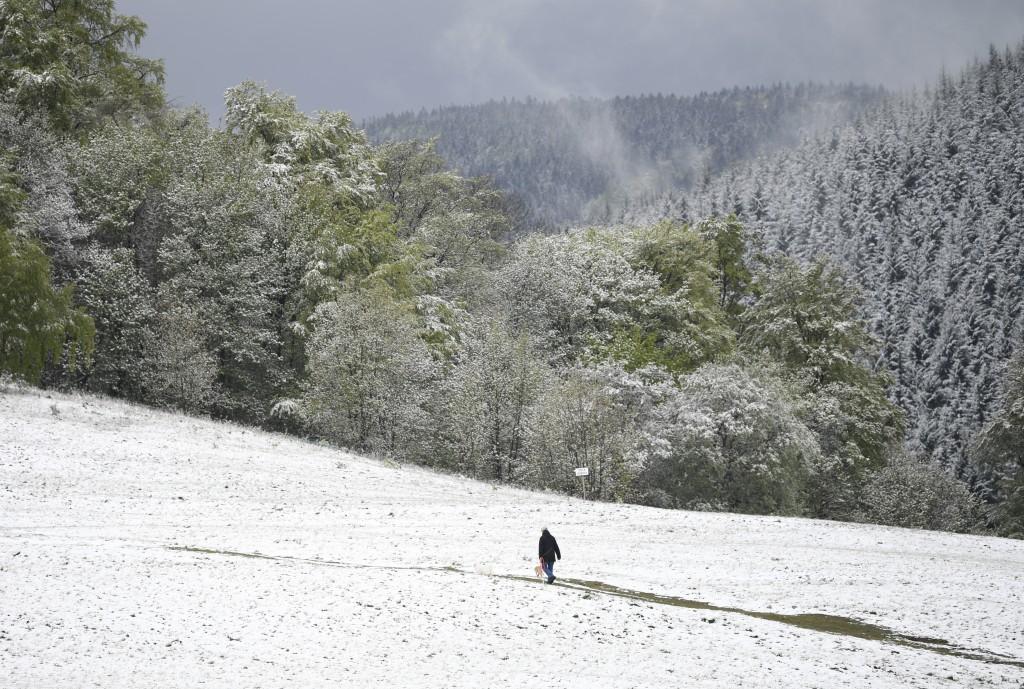 A man walks over a meadow after snow falls near the village Oberreifenberg, Germany, Saturday, May 4, 2019. ( Arne Dedert/dpa via AP)