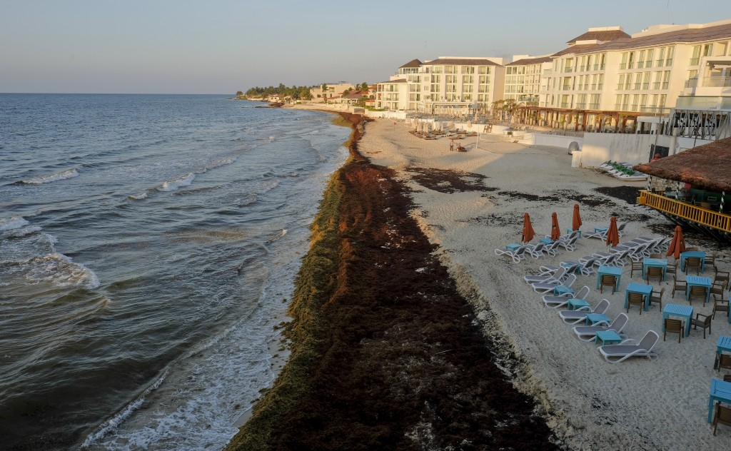 Sargassum seaweed covers the beach in Playa del Carmen, Mexico, Wednesday, May 8, 2019. Experts say the presence of sargassum seaweed is the new norma...