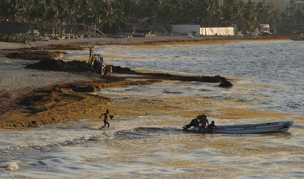 Sargassum seaweed fills the shore where fishermen push their boat to sea in Playa del Carmen, Mexico, Wednesday, May 8, 2019. As the new normal, it ma...