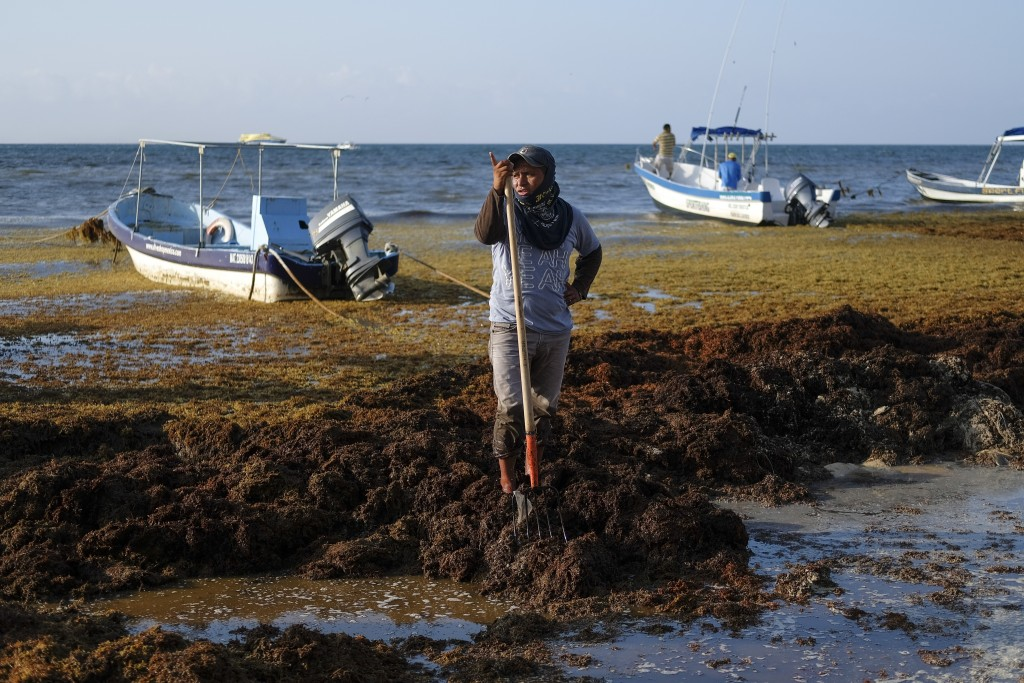A worker pauses from removing sargassum seaweed from the shore of Playa del Carmen, Mexico, Wednesday, May 8, 2019. The problem affects almost all the...