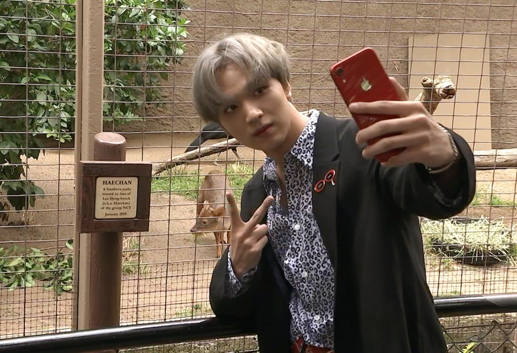 This May 15, 2019 image taken from video shows Haechan of the K-pop group NCT 127 taking a selfie with a baby pudu at the Los Angeles Zoo. Fans of the...